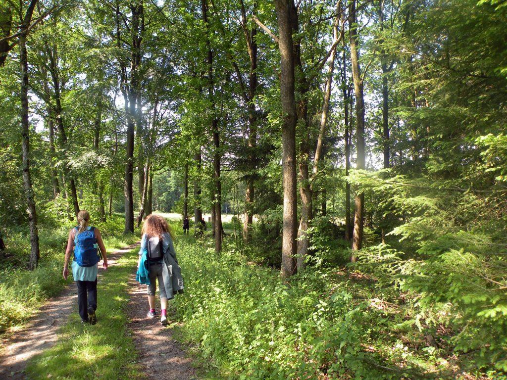 Singlewandewrland auf Wanderung von Dorfmark nach Walsrode, hier im Wald kurz hinter Dorfmark. eine jetztaberlos-tour