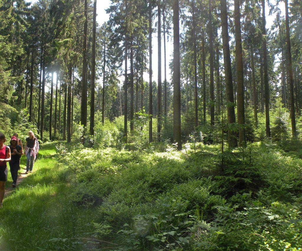 eine jetztaberlos-tour, wir auf dem weg von den schwarzen Bergen Richtung Wulmstorfer Heide. Hier in der Nähe des Heidschnuckenwegs bei der Siedlung Tempelberg