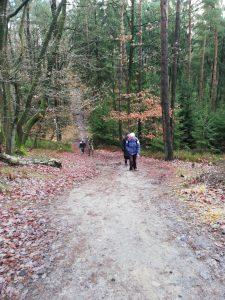Wanderung von Singlewanderland durch die Schwarzen Berge und die Fischbeker Heide. Hier sehen wir die Erklimmung eines Berges