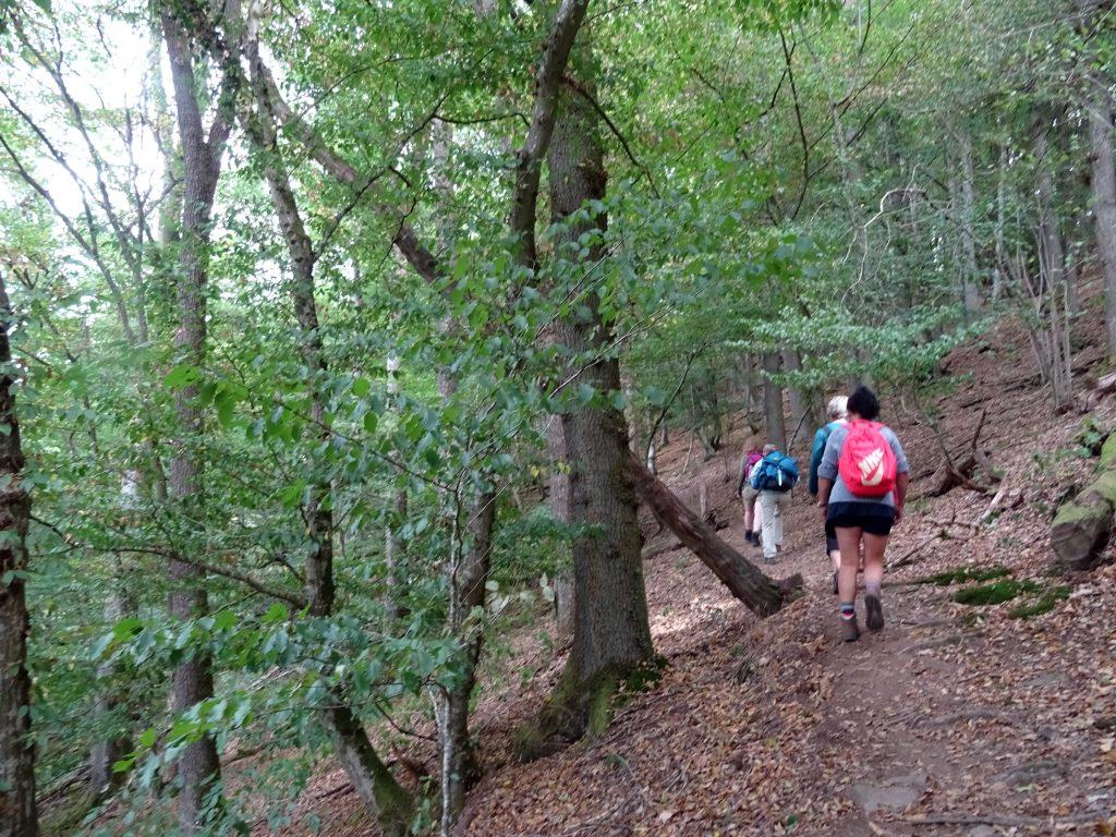 Wanderweg an der Ourthe, Teil des Eislek Trails und des Fernwanderwegs GR 57