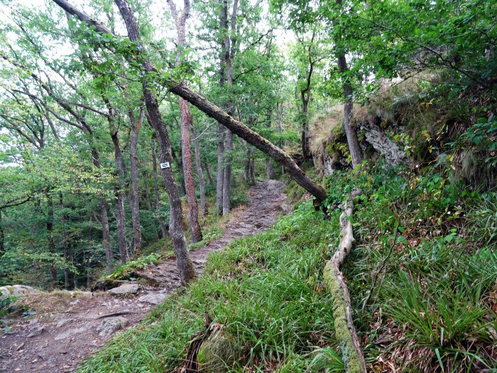 Der Höhenwanderweg parallel zur Ourthe, hier nach Abstieg vom Herou Felsen