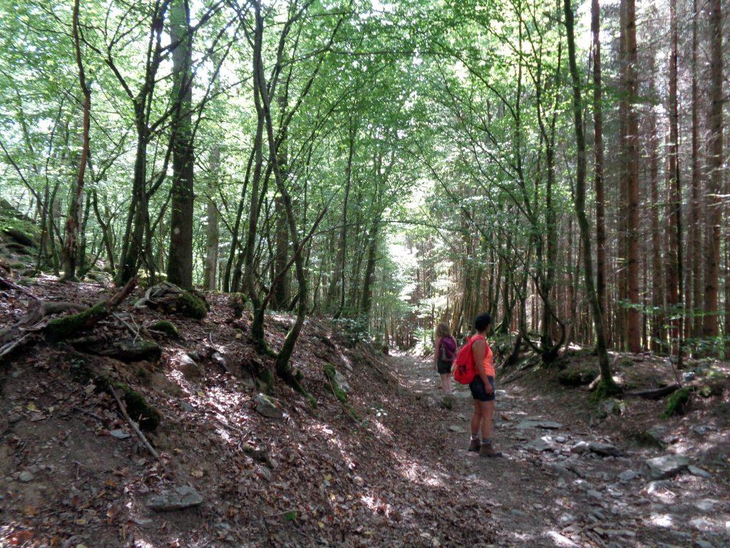 Tief eingegrabener Weg auf dem Abstieg von Redu an die Lesse
