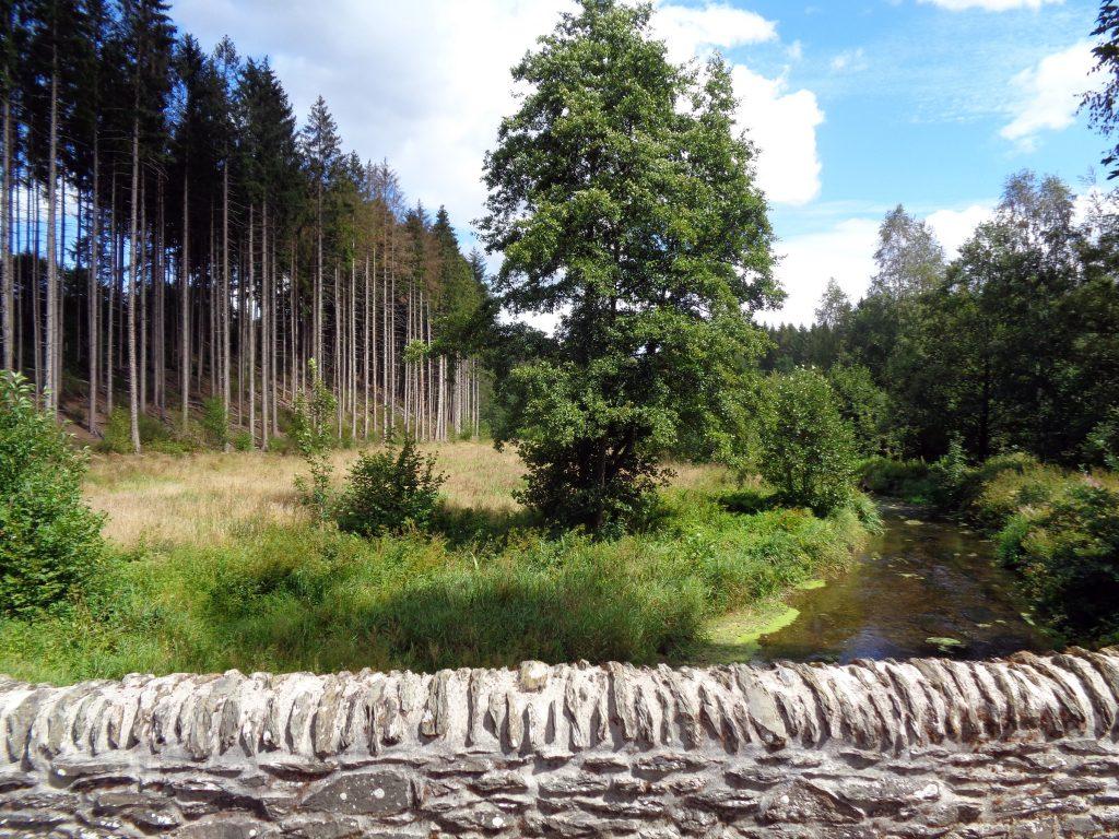 Wald bei Maissin in den Ardennen. Eine Singlewanderlandtour auf Wanderreise